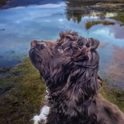 Looking for a treat at the Bay of Flies, Salen, Ardnamurchan